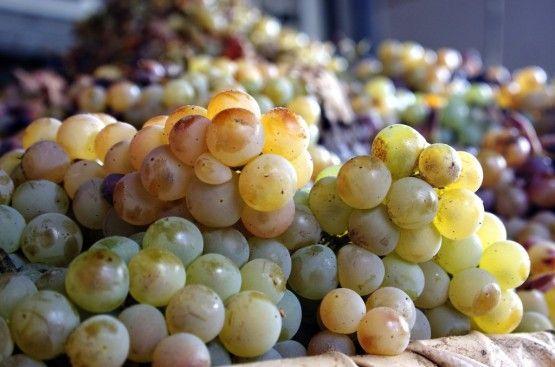 grapes-555x367