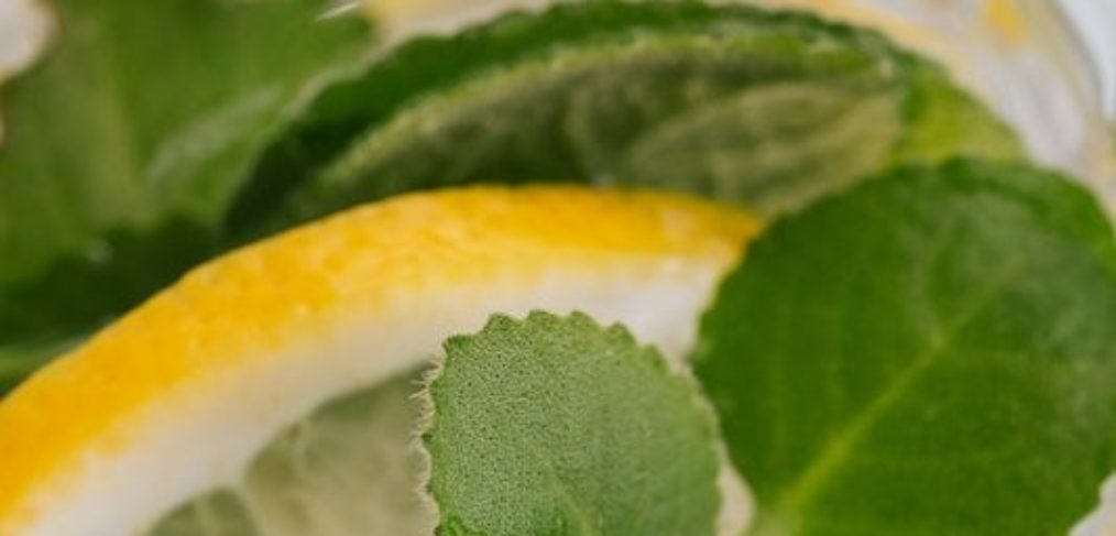elderflower gin review